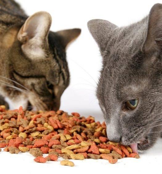 Можно ли давать кошке рыбу