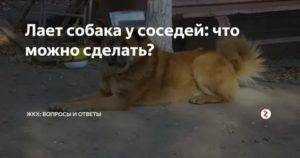 К чему воют собаки на улице утром. толкование поведения воющей собаки. почему воет собака