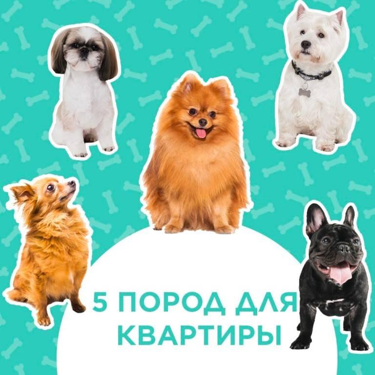 10 пород собак, которые ладят с кошками   hidogs.ru
