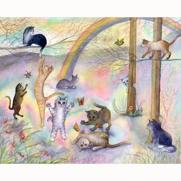 Куда попадает душа кошки после смерти и что с ней происходит на самом деле