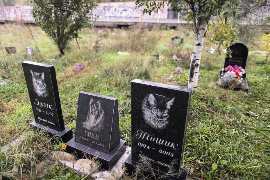 Как хоронят кошек и: как похоронить кошку самому?