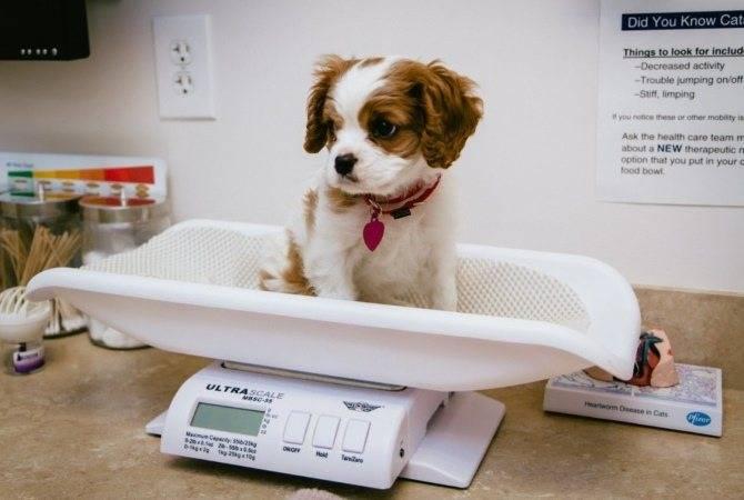 Частый понос у собаки: что делать и как с ним бороться?