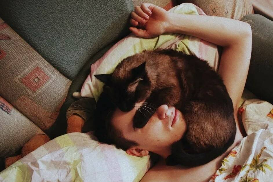 Можно ли спать с кошкой, почему нельзя?