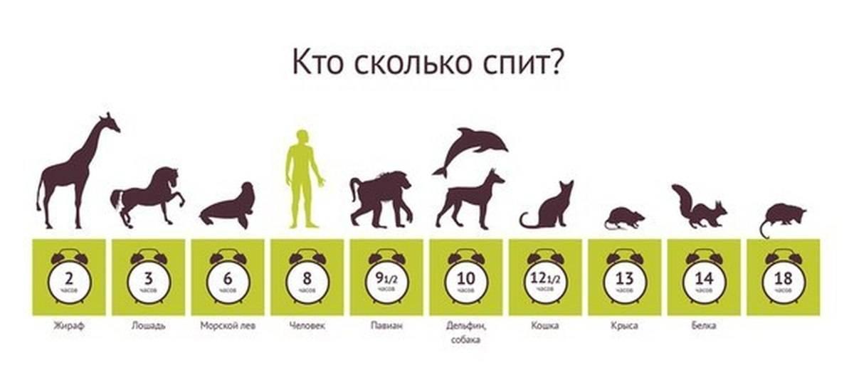 Сколько спят собаки в сутки, а также месячные щенки