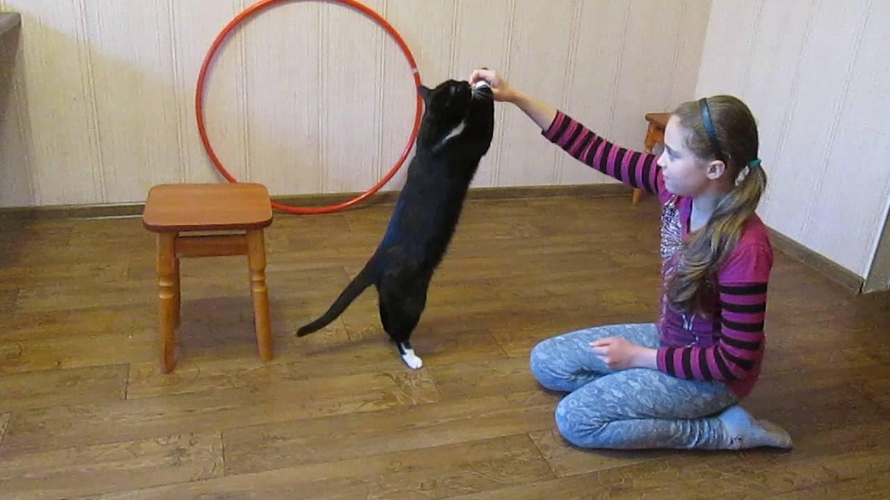 Как дрессировать крысу в домашних условиях