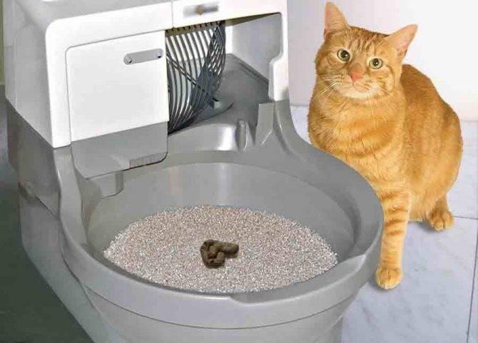 Зачем домашний кот пытается закопать свою еду?