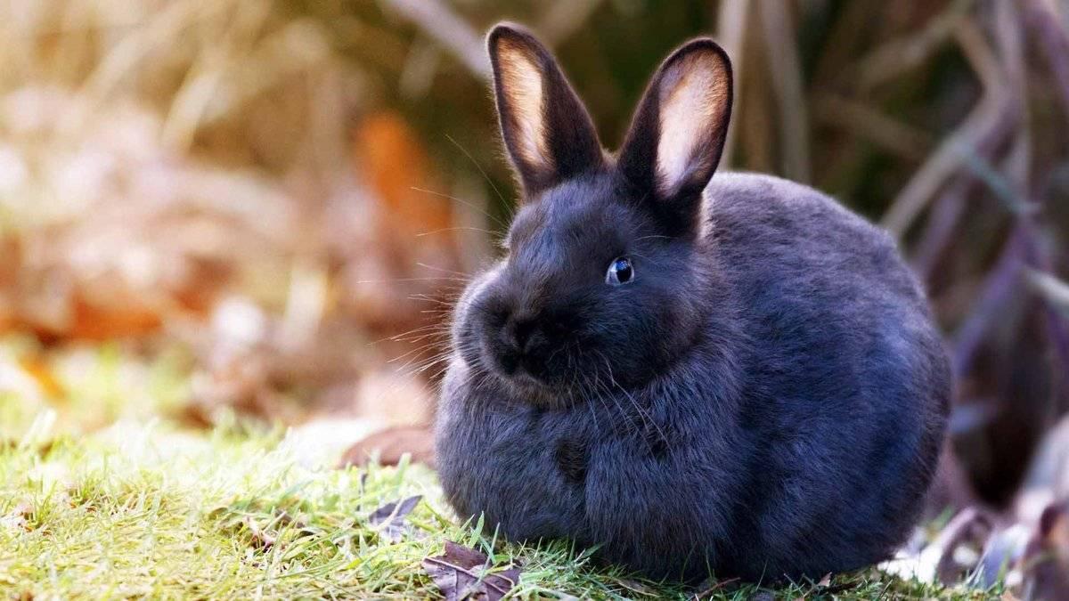 Как можно назвать домашнего кролика