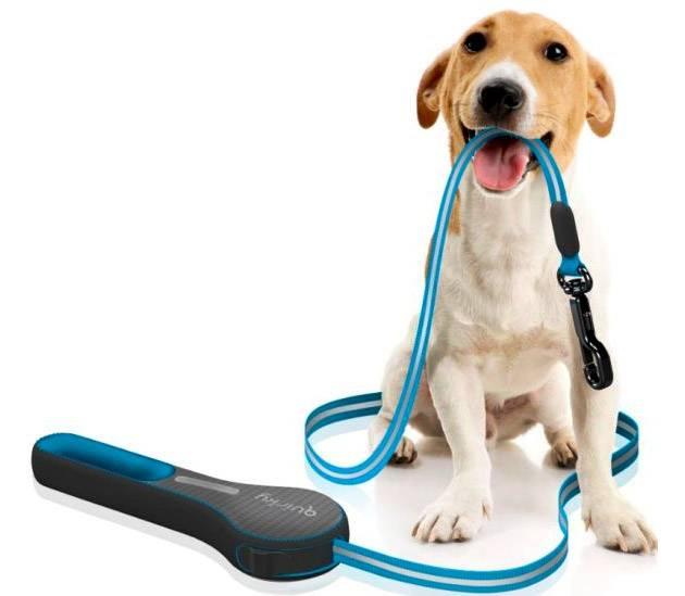 Как приучить собаку к ошейнику и поводку