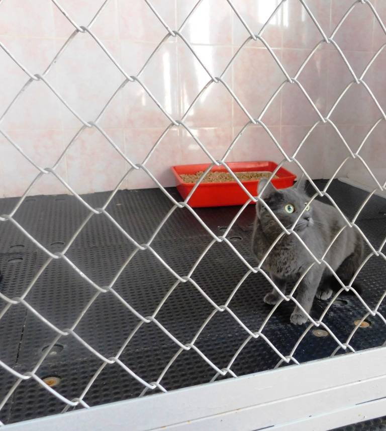 Где оставить кошку на время отпуска: куда можно ее деть