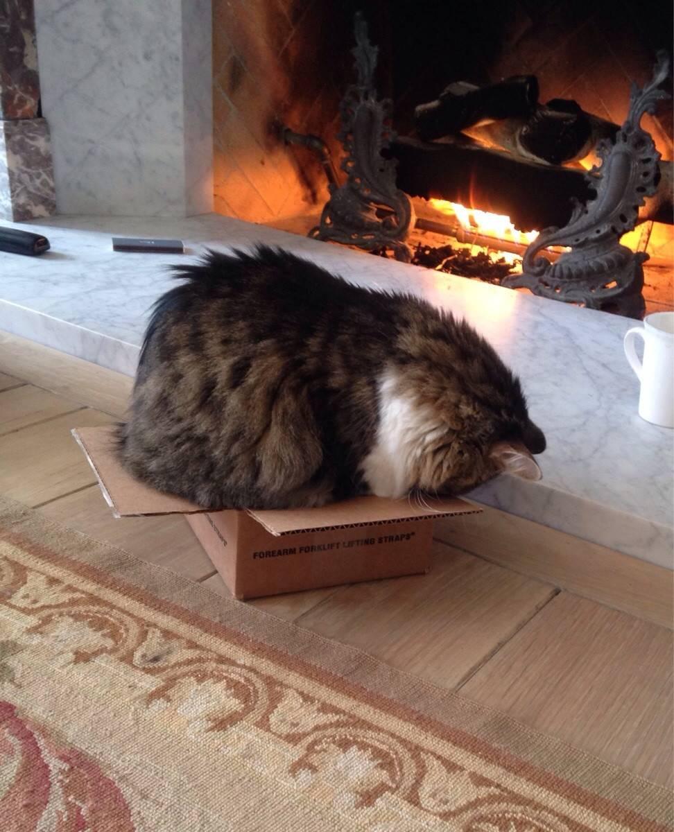 Почему кошки любят коробки и пакеты, из-за чего котам нравится в них сидеть и спать?