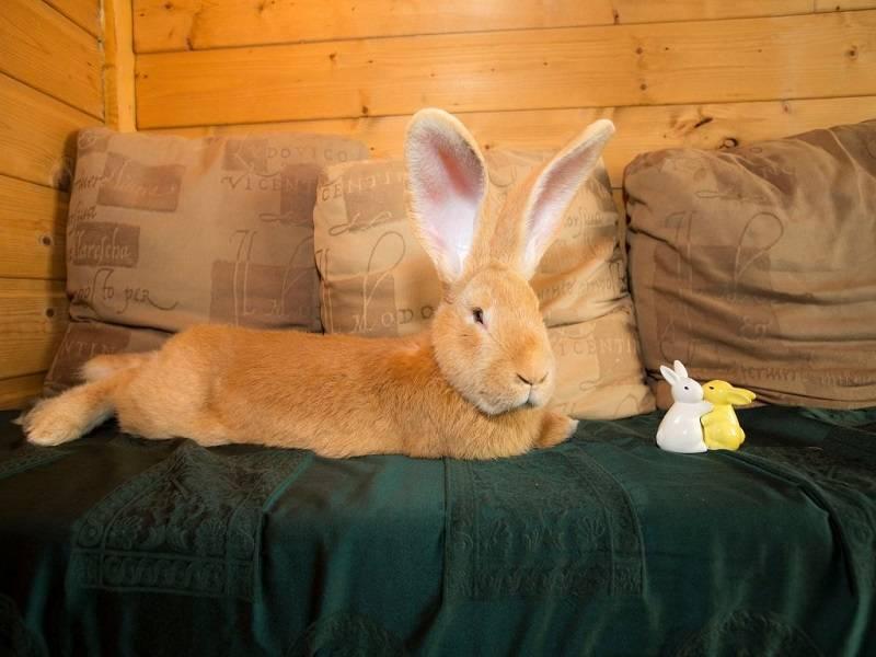 Как назвать декоративного кролика: лучшие имена для вашего питомца