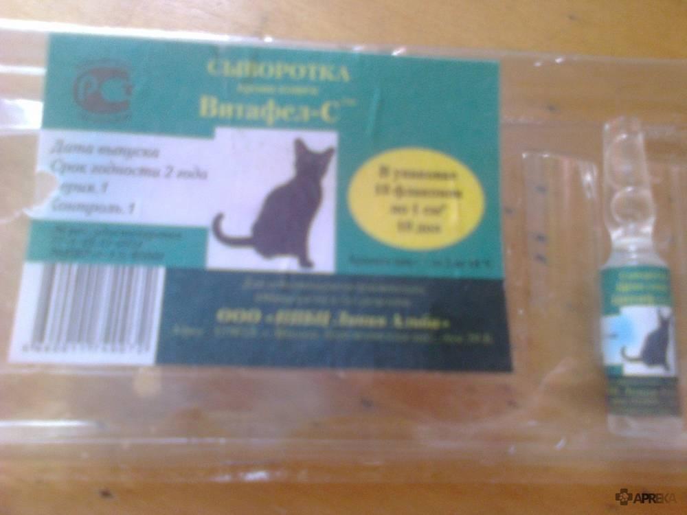 Витафел для кошек: инструкция, длительность терапии, особенности применения