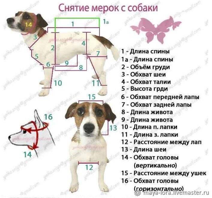 Как измеряется рост собаки в холке. где находится холка у собак: измеряем рост питомца правильно. где у собаки холка