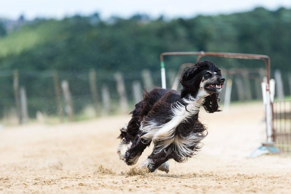 Какие породы собак самые умные в мире? топ-10 самых умных пород собак.