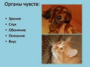 Зрение собак: как видят собаки?