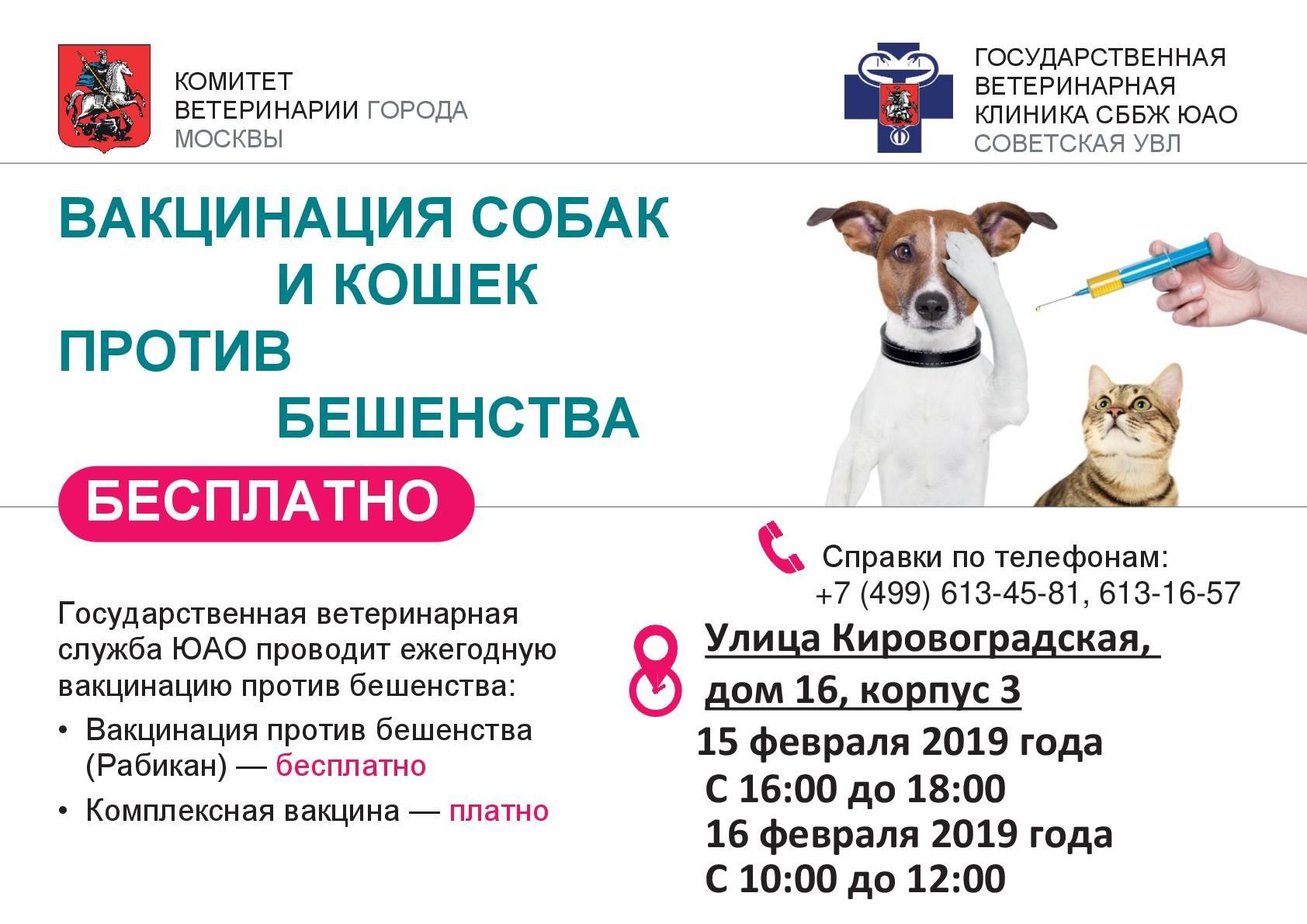 Прививаем кошку от бешенства: виды вакцин, влияние на организм кота, сроки проведения прививок и стоимость
