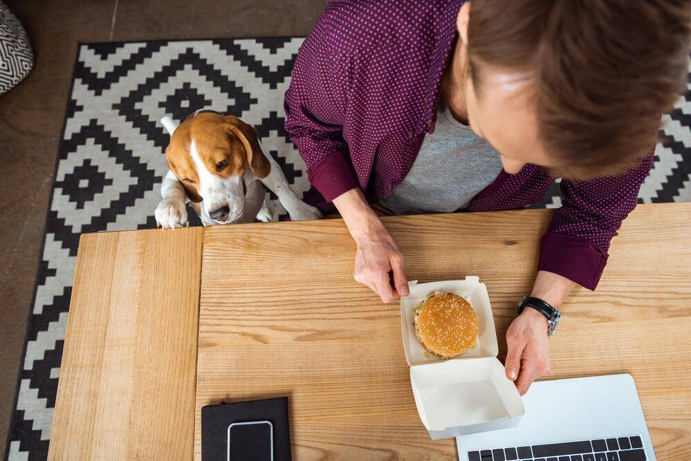 Разрешается ли кушать сухие и жидкие кошачьи корма людям: чем опасно