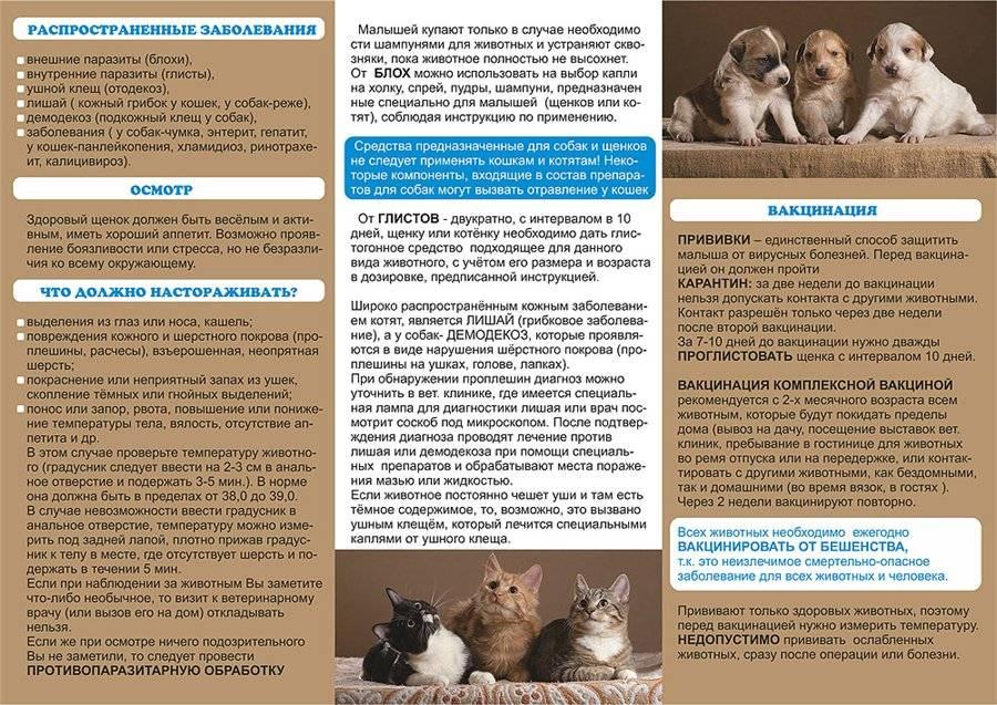 Что делать если подобрали кошку с улицы: план действий