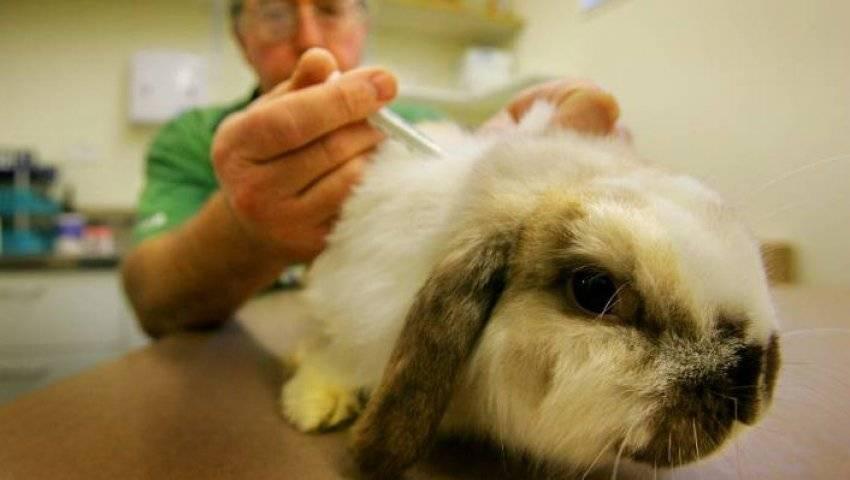 Что делать при поносе у кроликов и как его предотвратить