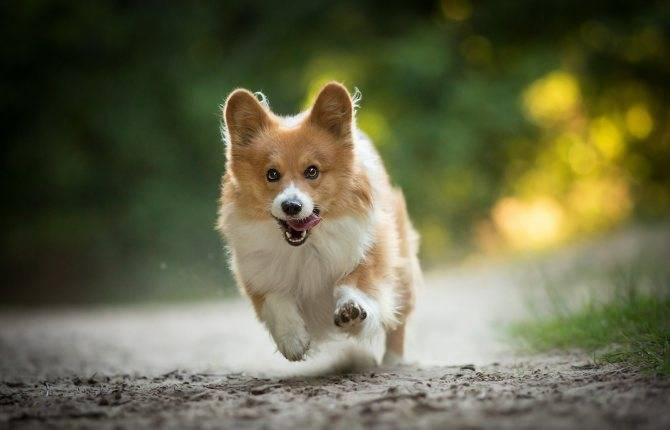 Собака убегает на прогулке: домой, к другим собакам, что делать владельцу, как найти питомца, стоит ли наказывать