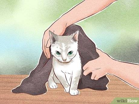 Как приручить кошку к рукам: простые советы