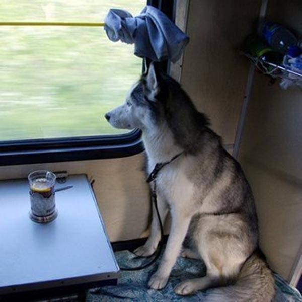 Как проехать с собакой в поезде по россии по новым правилам