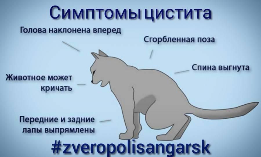 ᐉ причины и лечение недержания мочи у кота: что делать в домашних условиях - kcc-zoo.ru