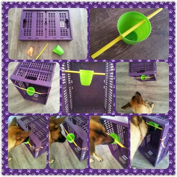 Как смастерить развивающие игрушки для собак своими руками