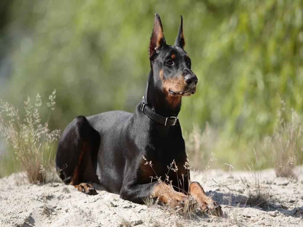 Самые ужасные породы собак. самые страшные собаки в мире. самая страшная и уродливая собака в мире