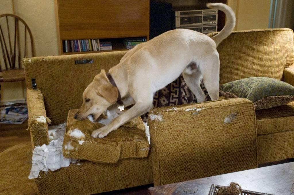 Узнаем как отучить собаку писать на кровать: основные рекомендации