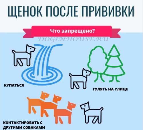 График прививок собак от бешенства чумки и комплексная вакцинация