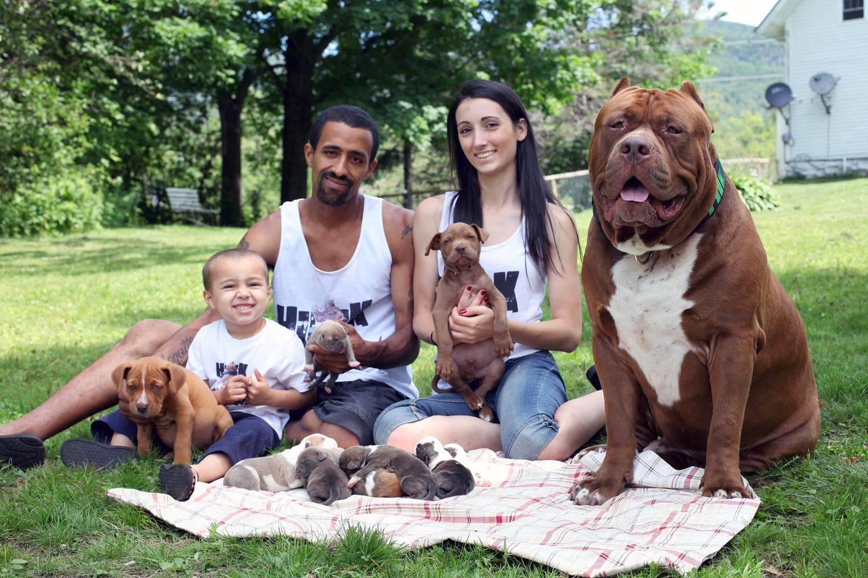 Породы собак средних размеров с фото, названиями и особенностями характера   знать про все