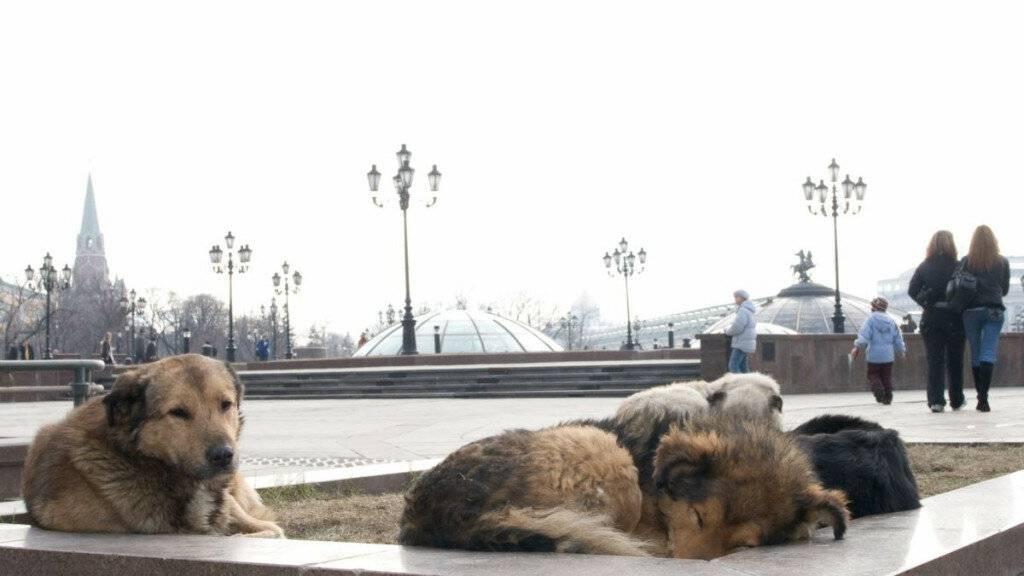 «многие до сих пор не знают, почему у собаки - бирка». проблема бездомных животных - как решать ее по закону | православие и мир