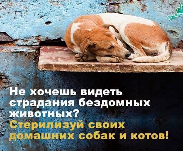 Как решают проблему бездомных животных вроссии иназападе ичто делать, если хочешь помочь — нож