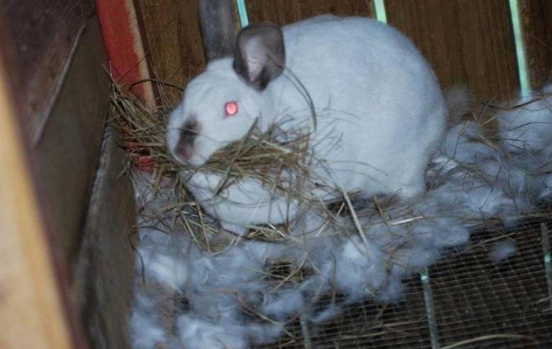 Почему крольчиха не подпускает крола: причины