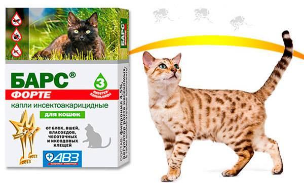 Капли барс от блох для кошек: особенности использования и инструкция по применению