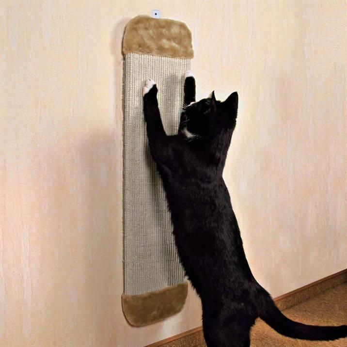 Как отучить кота драть обои и мебель: подборка лучших методов