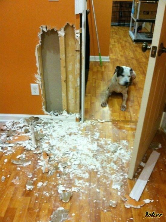 Как отучить собаку лаять дома