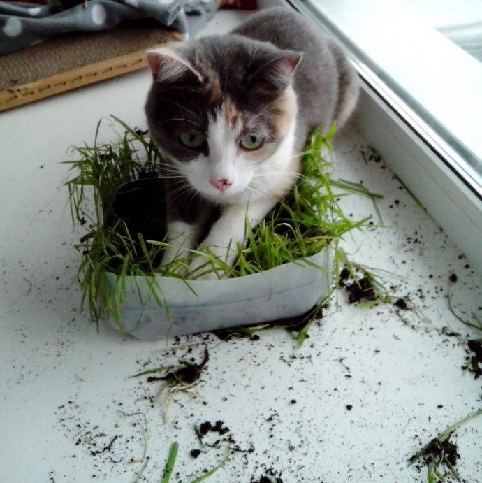 Почему кошки едят траву? — причины