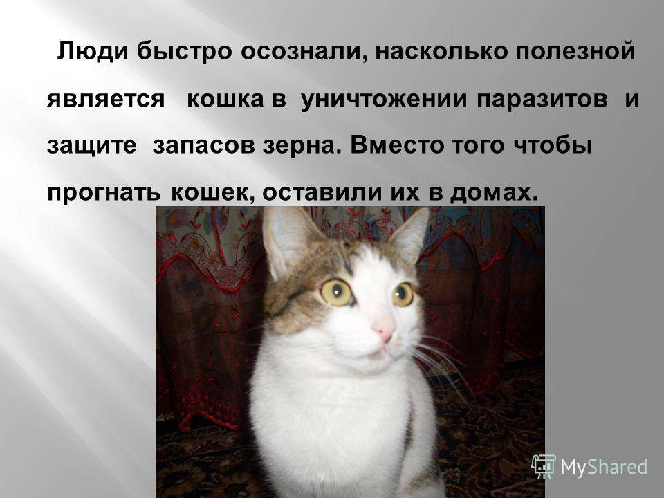 На какой срок можно оставлять кошку одну
