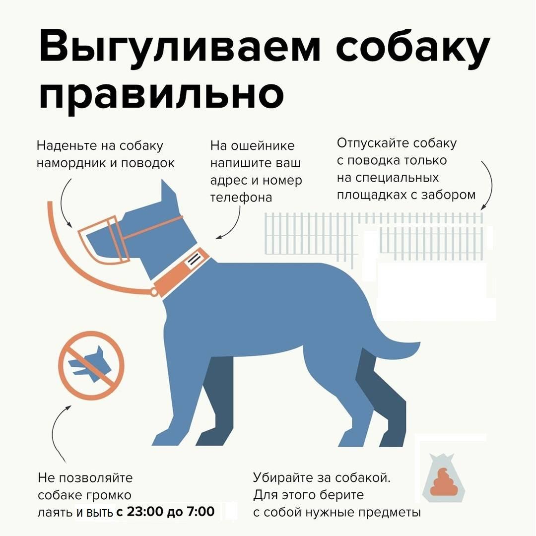 Выгул собак в рф – изменения в законодательстве 2020 года