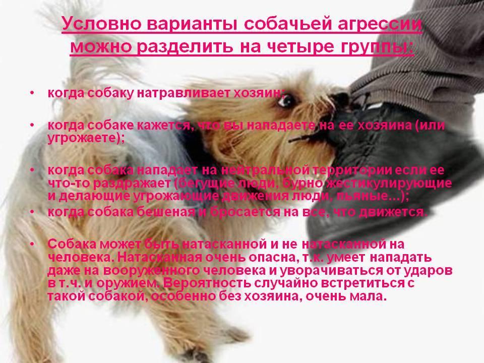 Что нужно сделать по закону когда укусила собака и что грозит ее хозяину