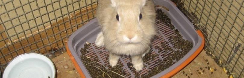 Понос у кролика чем лечить в домашних условиях   tsitologiya.su