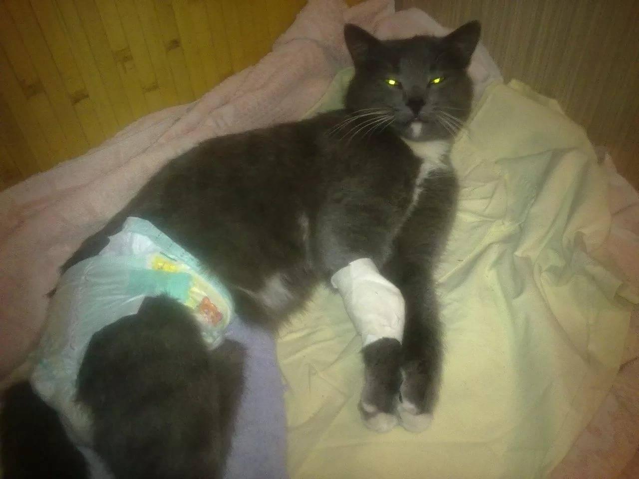 Коронавирус у кошек - механизм развития, пути заражения, симптомы и лечение, профилактика инфекции