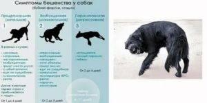 Все о бешенстве у кошек – какие признаки, симптомы, инкубационный период и профилактика