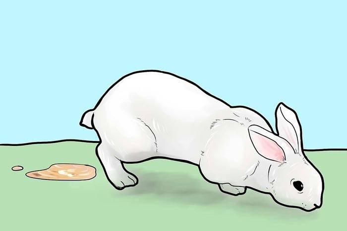 Понос у кроликов — причина и лечение