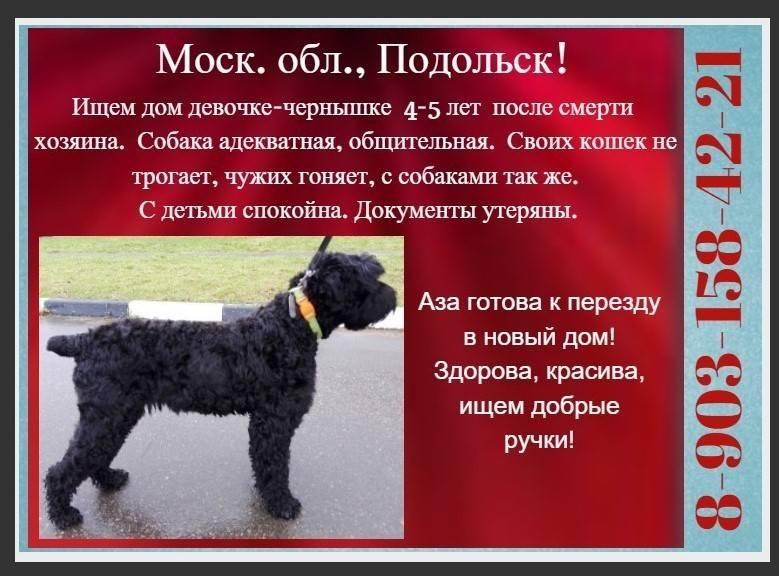Русский черный терьер: происхождение породы, основные характеристики и требования к содержанию