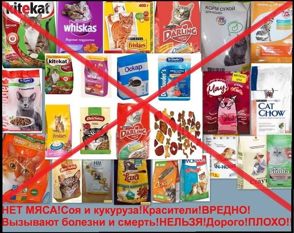 Вреден ли сухой корм для кошек: опасные компоненты в составе, какой вред может нанести некачественная еда, мнение ветеринаров