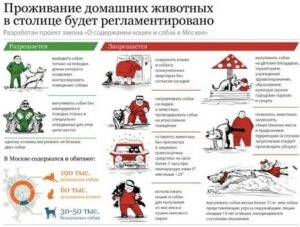 Закон «о собаках»