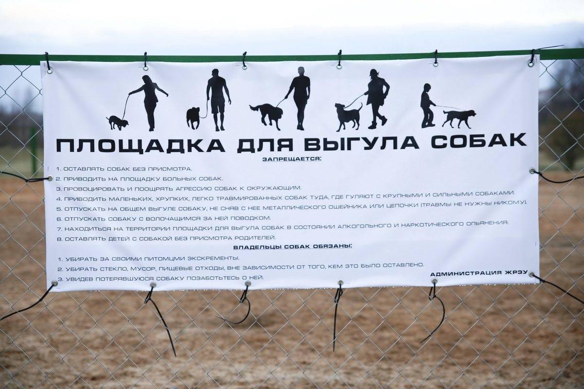 Нормы площадок и мест для выгула собаки: правила содержания и поведения